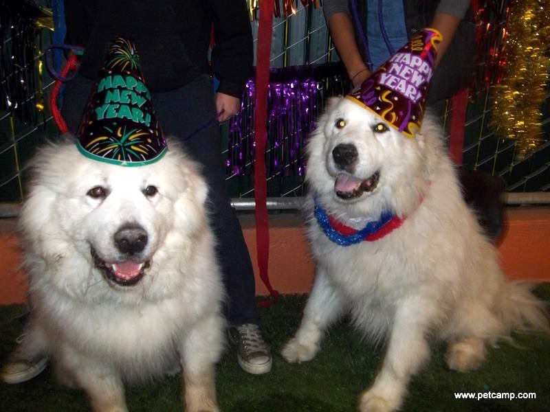pet-camp-new-years-eve