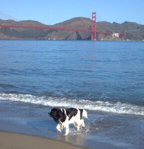 Splash-and-the-Golden-Gate-1-2-289x300.jpg