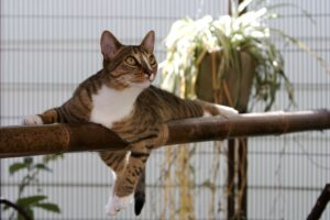 pet-care-services-guido-cat-300x200.jpg